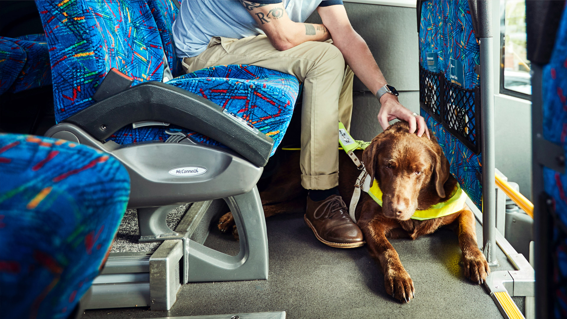 Guide dog on coach